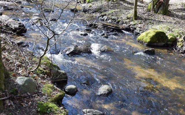 Gmina Kolbudy. Jar Reknicy – spacer wśród stuletnich buków i szumiących wodospadów