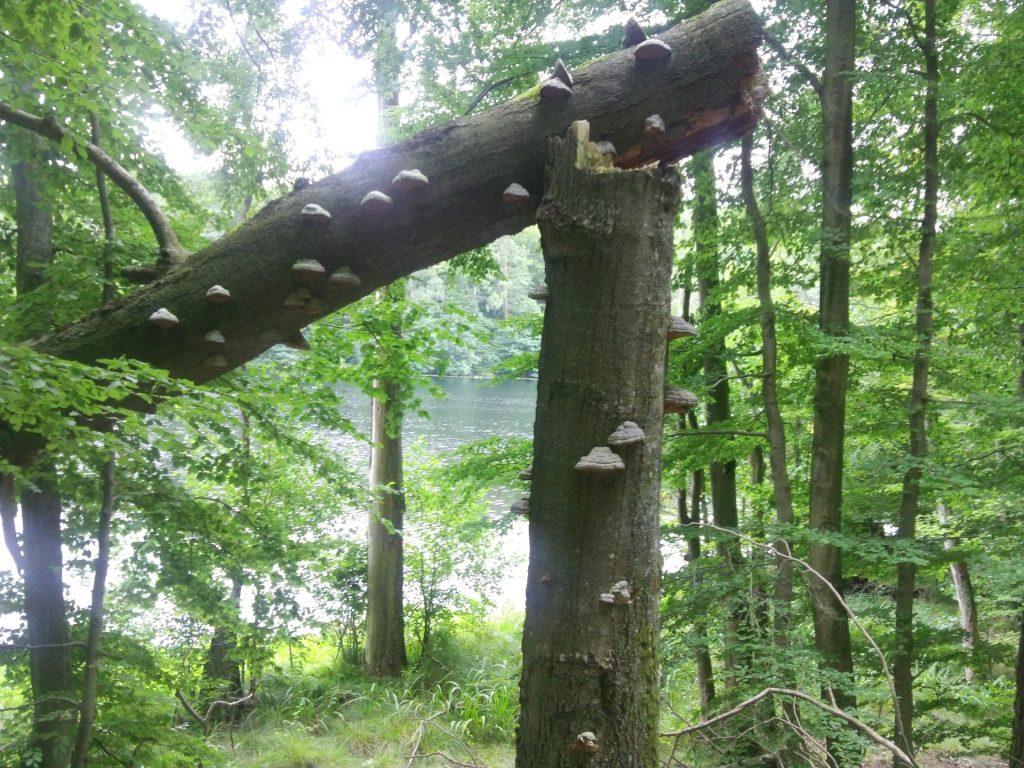Grota, bunkier i zgubiony szlak 6