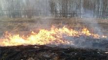 Wypalanie_traw_1_news_image_normal
