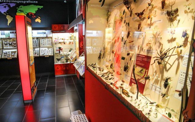 Łeba, Muzeum motyli. Zobacz największe na świecie okazy 3