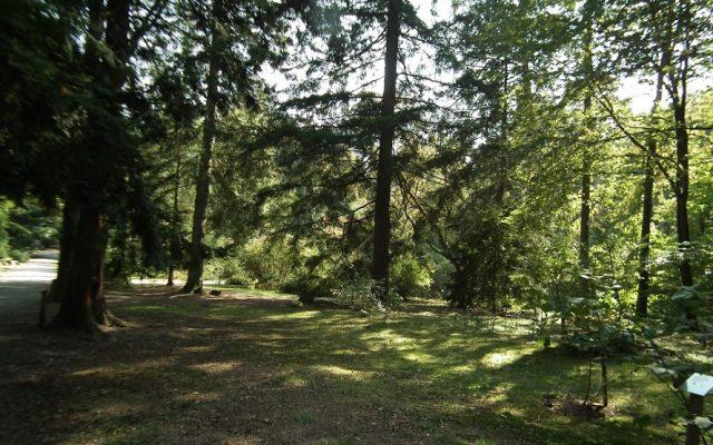 Arboretum w Kozinie 1