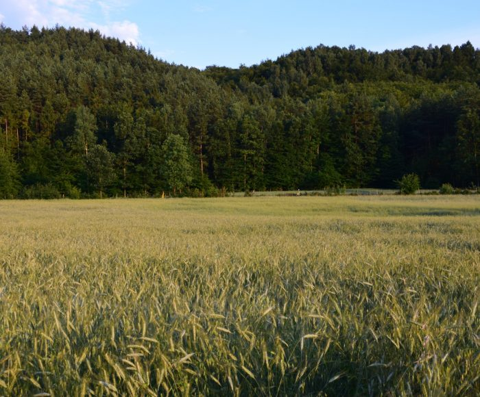 Lasy Mirachowskie