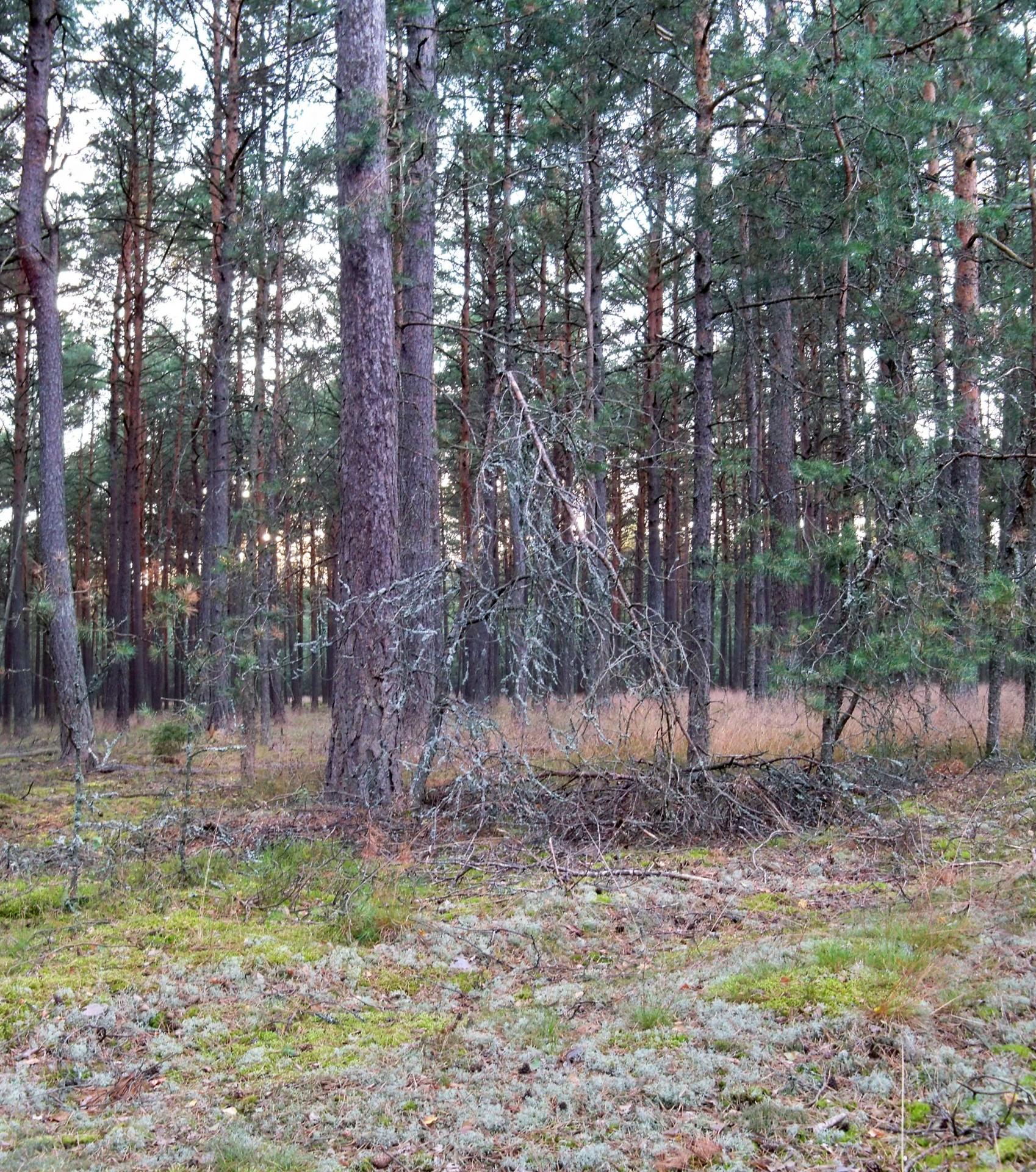 """Rezerwat Przyrody """"Krwawe Doły"""" Źródło: Wikipedia Autor: Panek"""