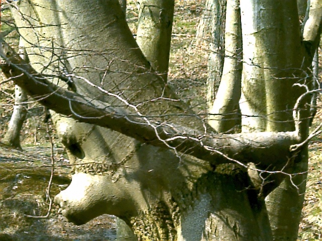 """Rozewie, Rezerwat przyrody """"Przylądek Rozewski"""""""
