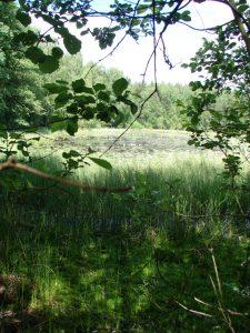 Bytów i okolice. Rezerwaty przyrody 3
