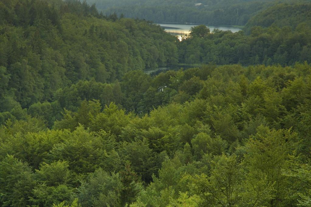 Lasy Mirachowskie. Rezerwaty przyrody