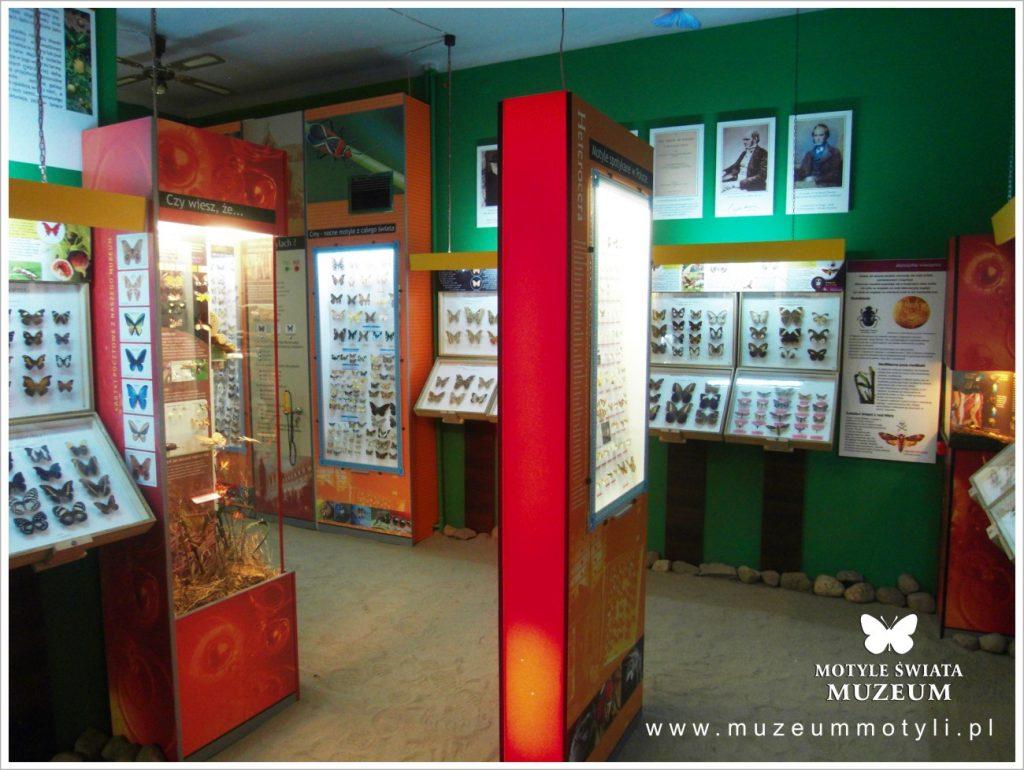 Fot.: Władysławowo, Muzeum motyli, źródło: www.muzeummotyli.pl, autor: K. Kędzior
