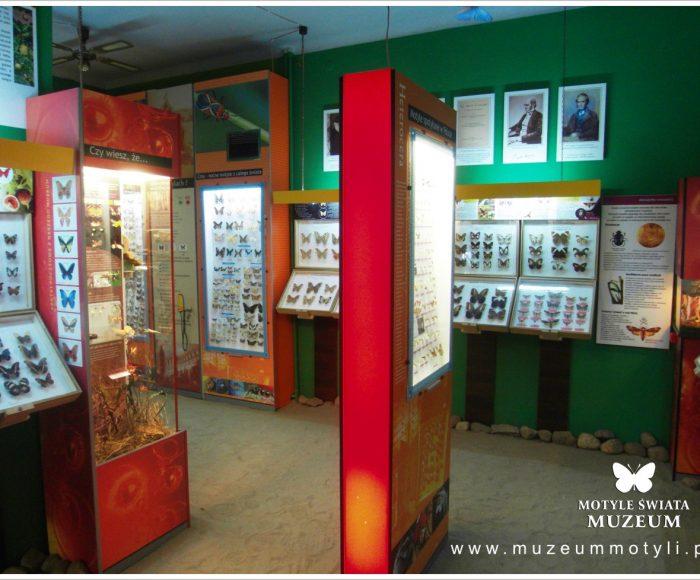Władysławowo, Muzeum (nie tylko) motyli