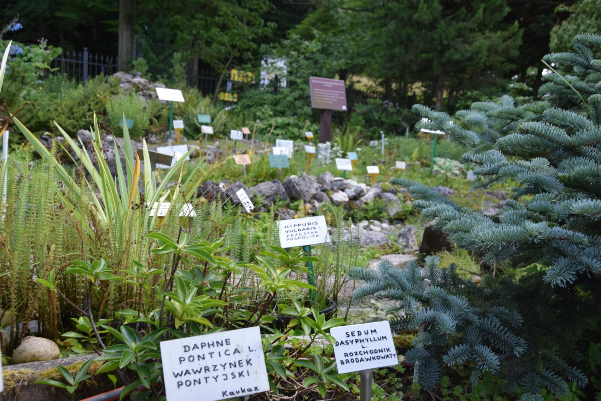 Gołubie. Ogród Botaniczny, rośliny ozdobne, lecznicze, arboretum 7
