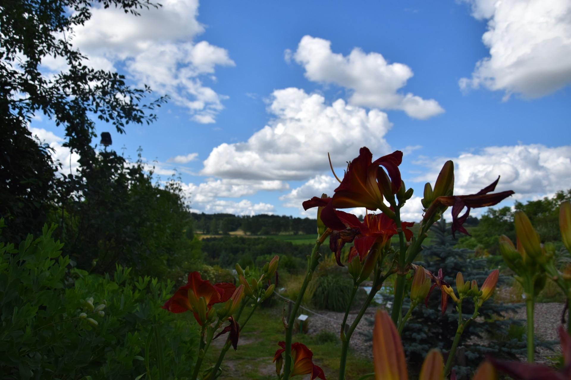 Gołubie. Ogród Botaniczny, rośliny ozdobne, lecznicze, arboretum 4