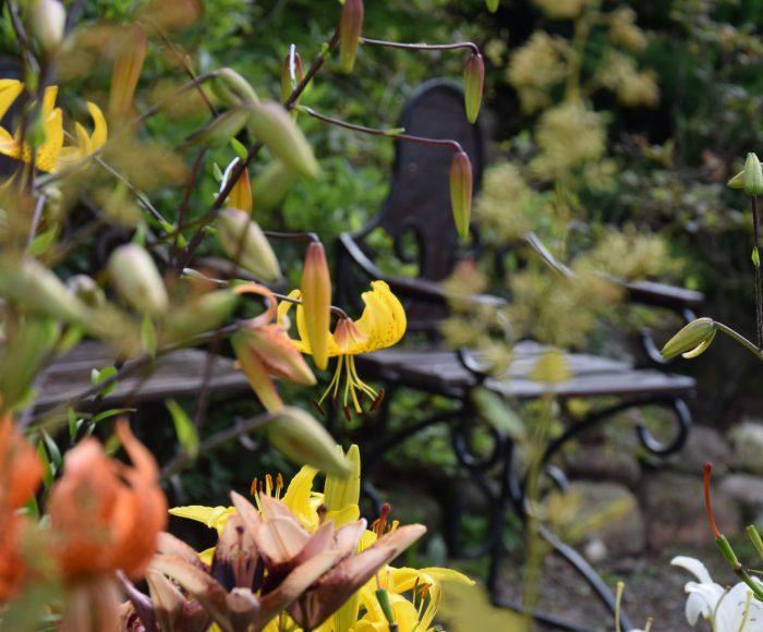 Gołubie. Ogród Botaniczny, rośliny ozdobne, lecznicze, arboretum 3