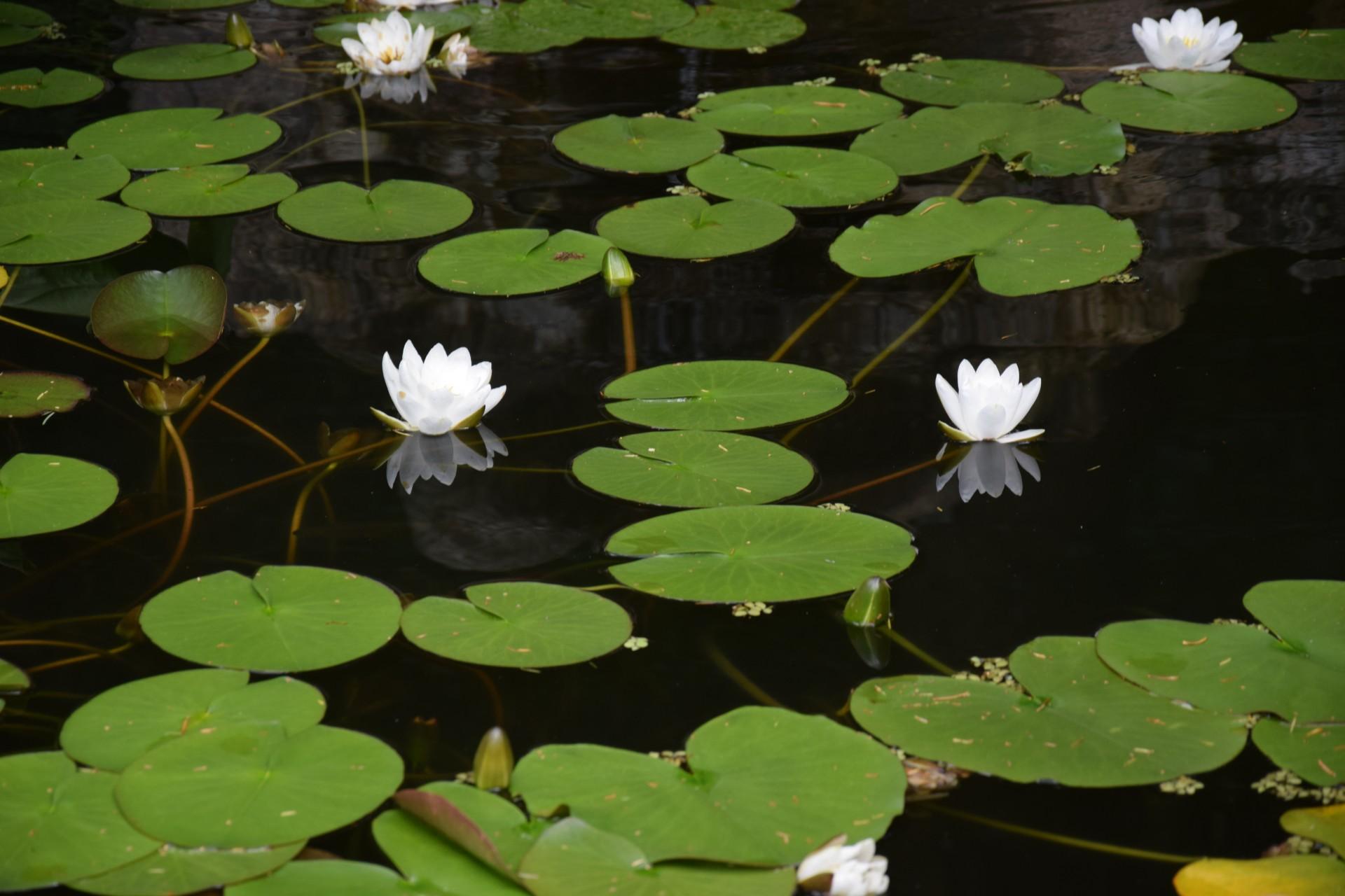 Gołubie. Ogród Botaniczny, rośliny ozdobne, lecznicze, arboretum 2