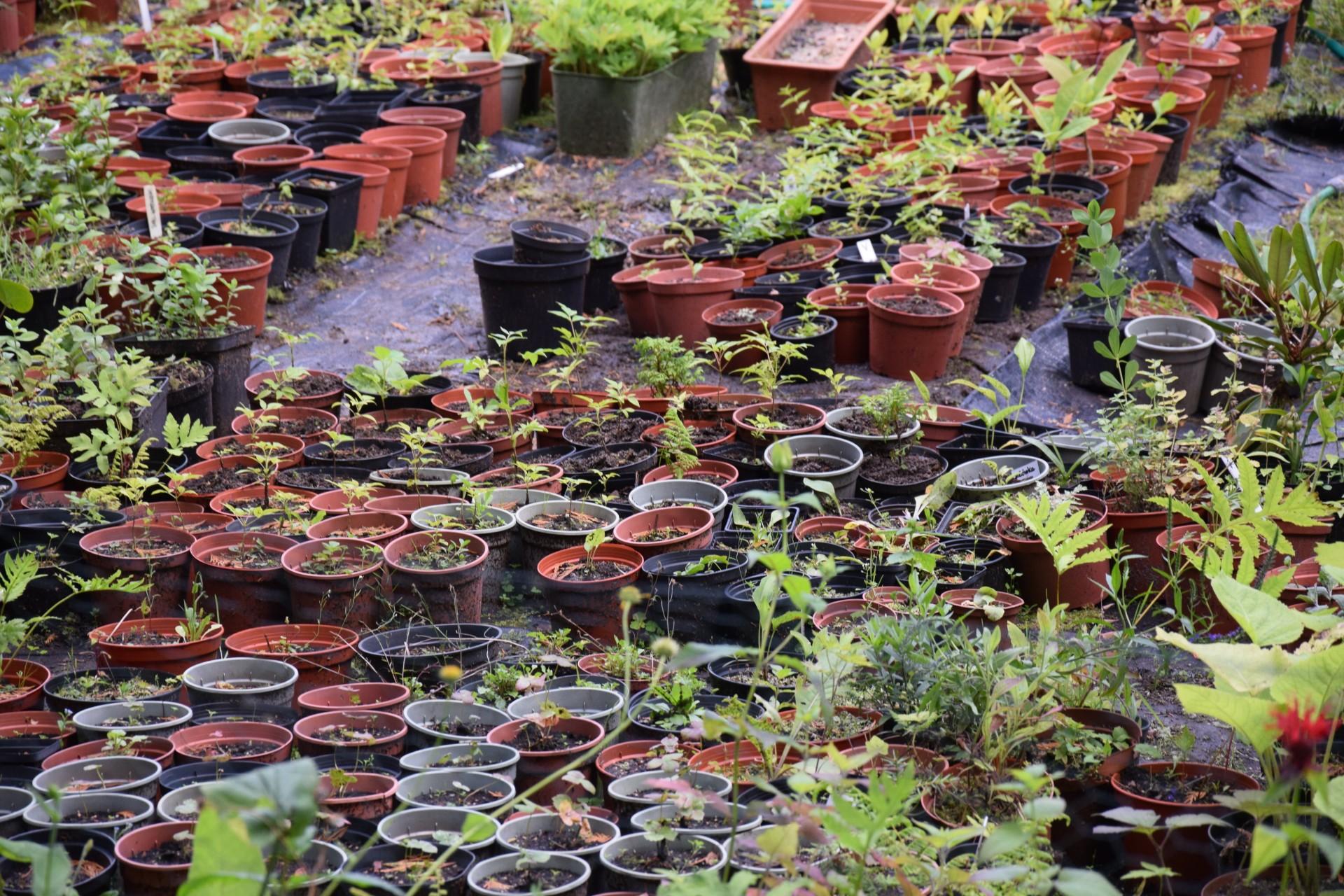 Gołubie. Ogród Botaniczny, rośliny ozdobne, lecznicze, arboretum 1