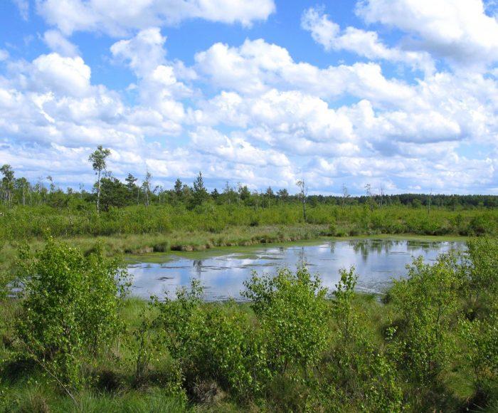 Rezerwat przyrody Bielawa, mieszkanie żurawi na Kaszubach