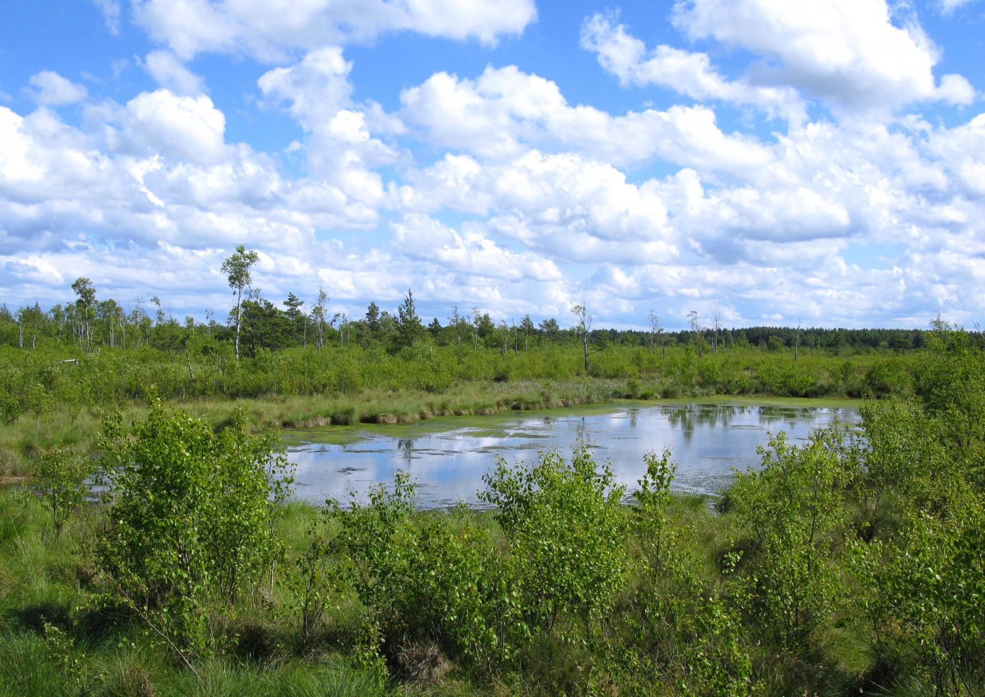 Fot.: Rezerwat przyrody Bielawa, źródło: Wikipedia, autor: Maciej Szczepańczyk
