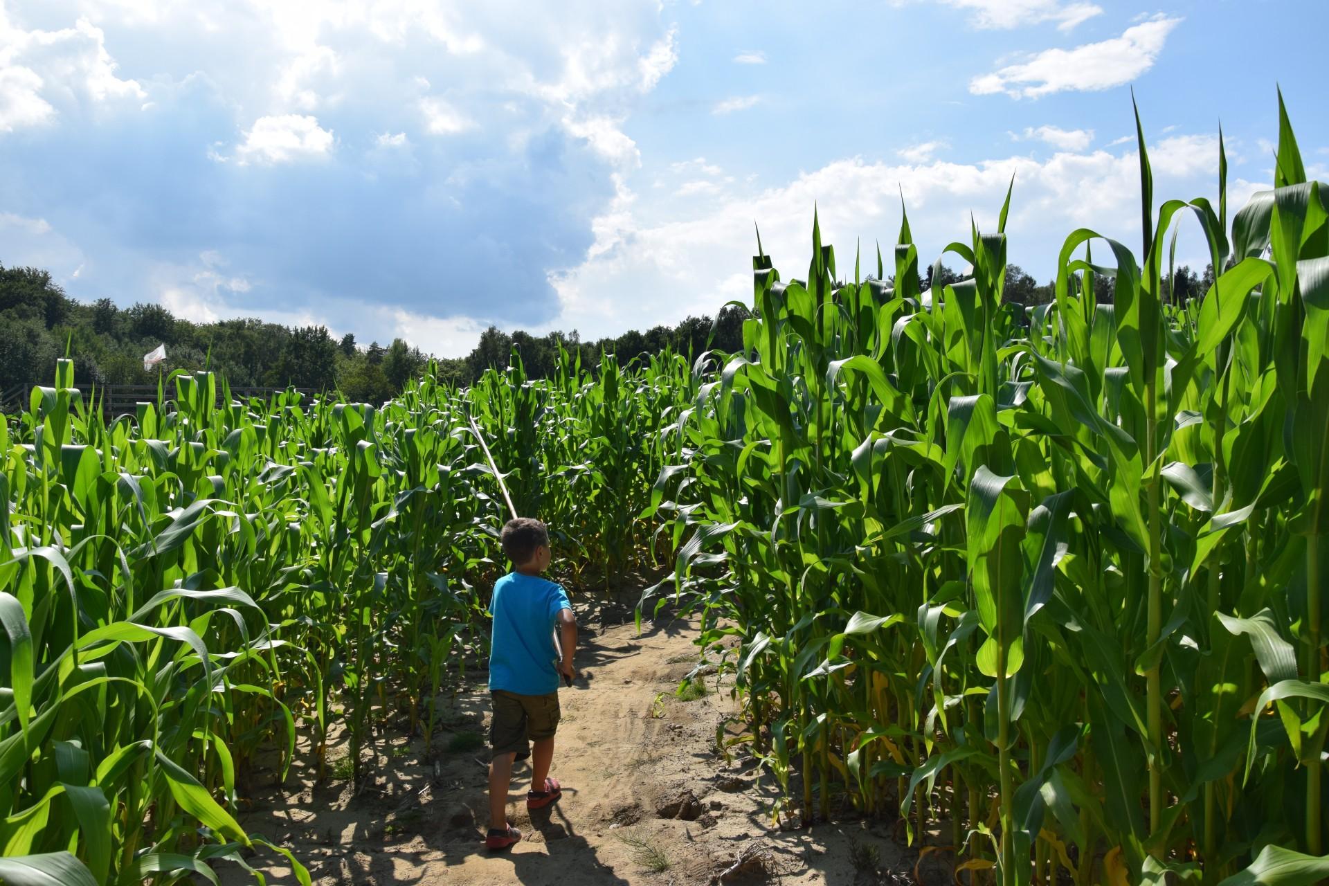 Labirynty w Blizinach. Kosmos w kukurydzy 6