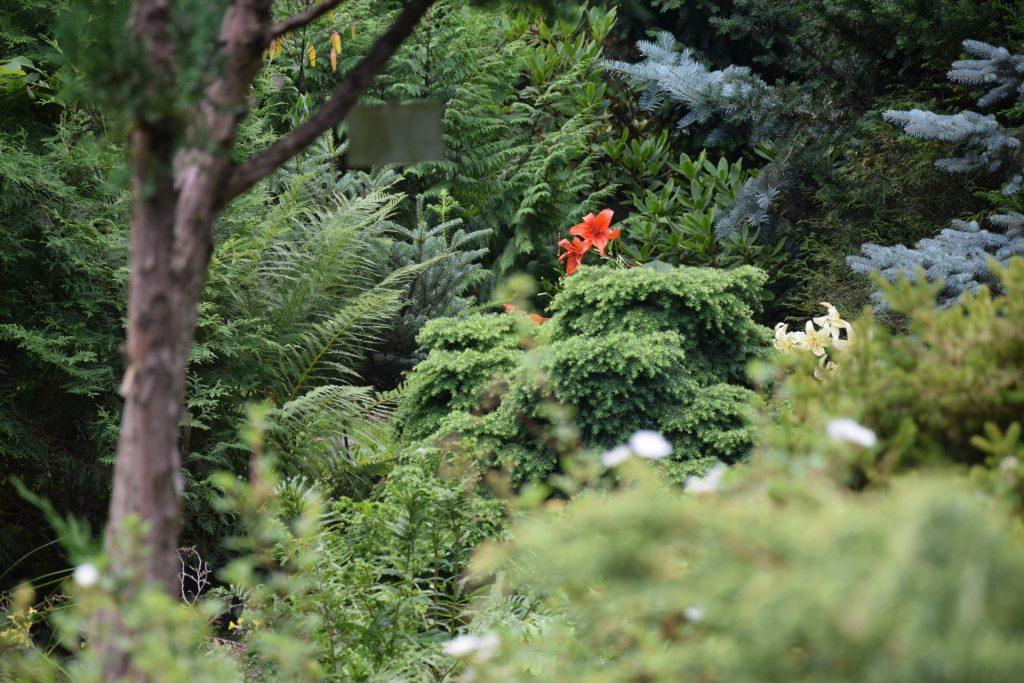 Gołubie. Ogród Botaniczny, rośliny ozdobne, lecznicze, arboretum