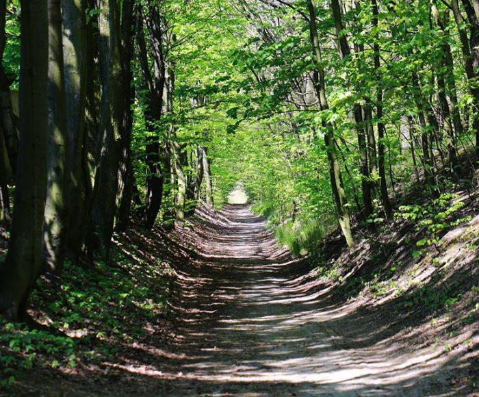 Chojnice. Lasek Miejski - spokojny teren do spacerów i miejsce pamięci 1