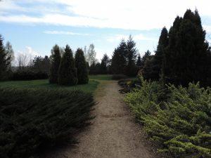 Fot.: Luzino, Arboretum, źródło: Wikimapia, autor: Krzysztof Ziarnek