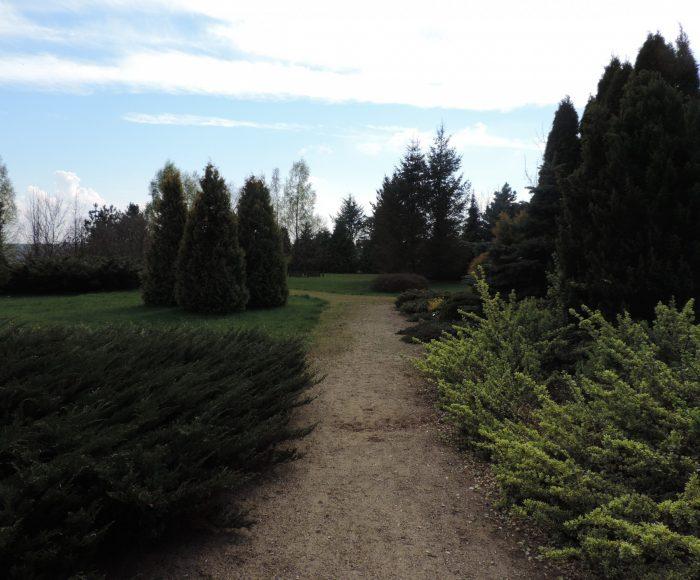 Luzino, Arboretum. Spacer i wypoczynek w pięknym parku