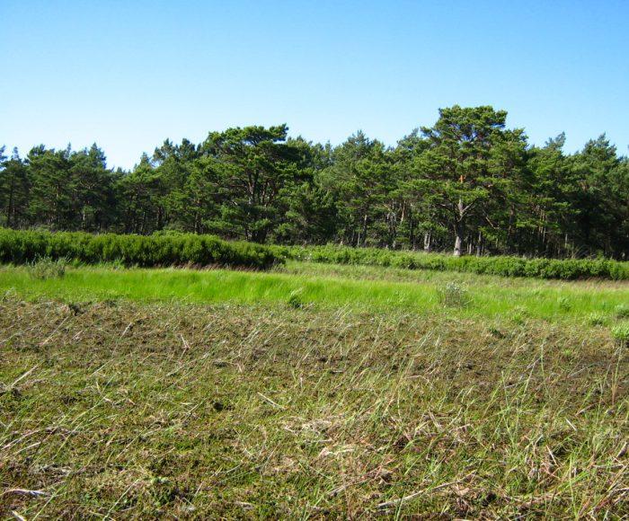 Rezerwat przyrody Białogóra. Nadmorskie tereny chronione