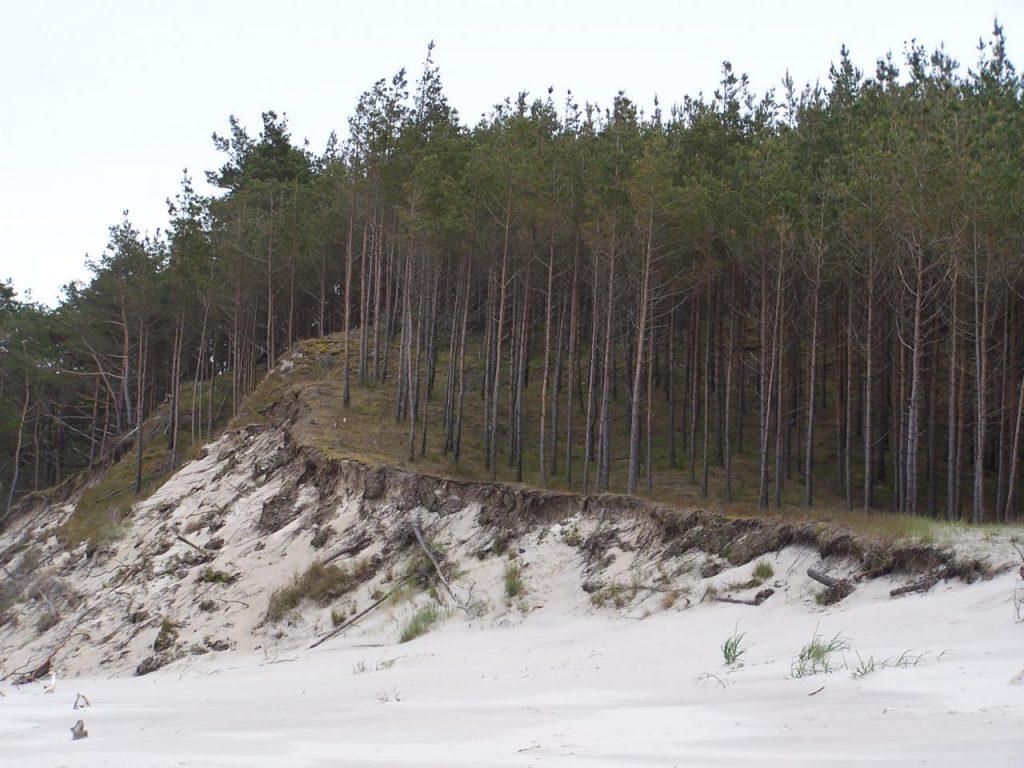 Fot.: Rezerwat przyrody Widowo, źródło: Wikimedia, autor: gajowy