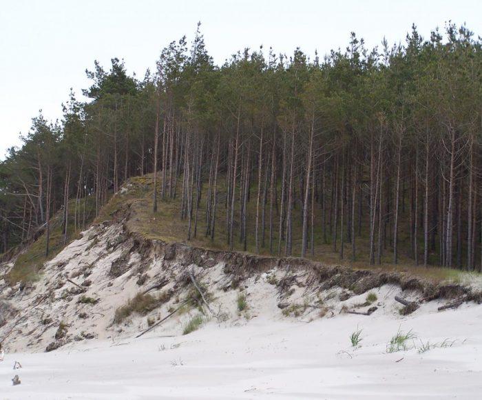 Rezerwat przyrody Widowo, urokliwy spacer wśród wydm i lasów