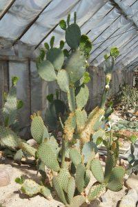 Fot.: Rumia, Kaktusiarnia, źródło: Wikimapia, autor: Kashub