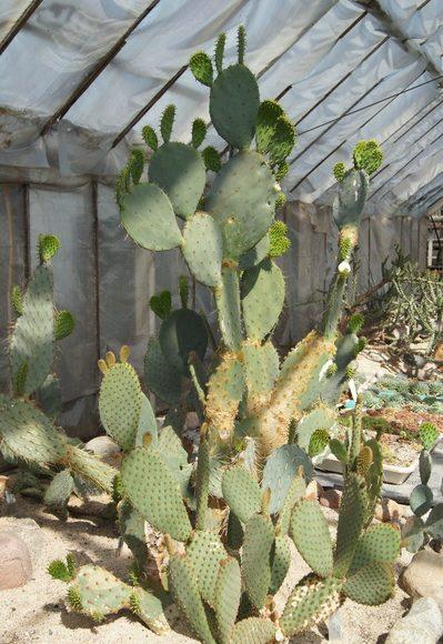 Rumia, Kaktusiarnia. Największa kolekcja kaktusów w Polsce