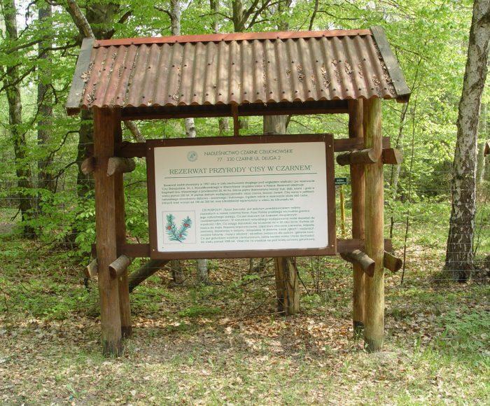 """Człuchów i okolice. Rezerwat przyrody """"Cisy w Czarnem"""" 3"""