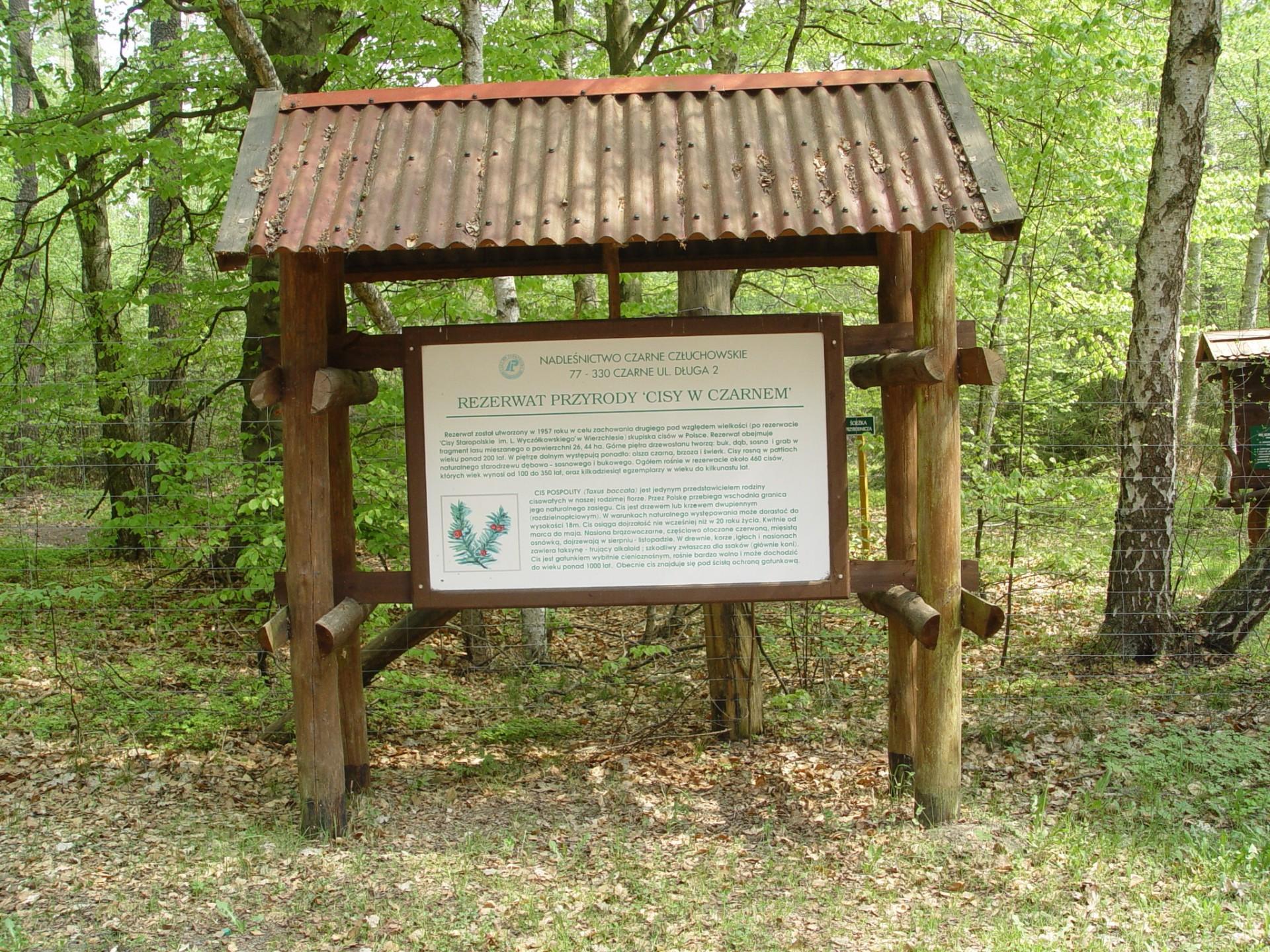 Człuchów, rezerwat Cisy w Czarnem, autor: Agnieszka Beńko