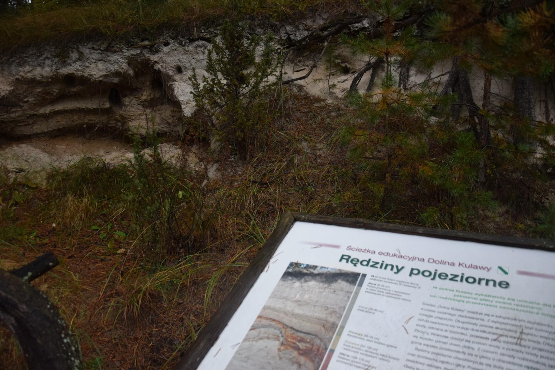 """Ścieżka przyrodnicza """"Dolina rzeki Kulawy"""""""