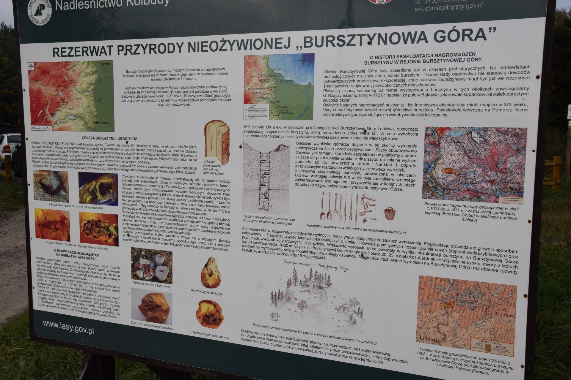 Bąkowo. Rezerwat przyrody Bursztynowa Góra. Fot. Tomasz Słomczyński/Magazyn Kaszuby