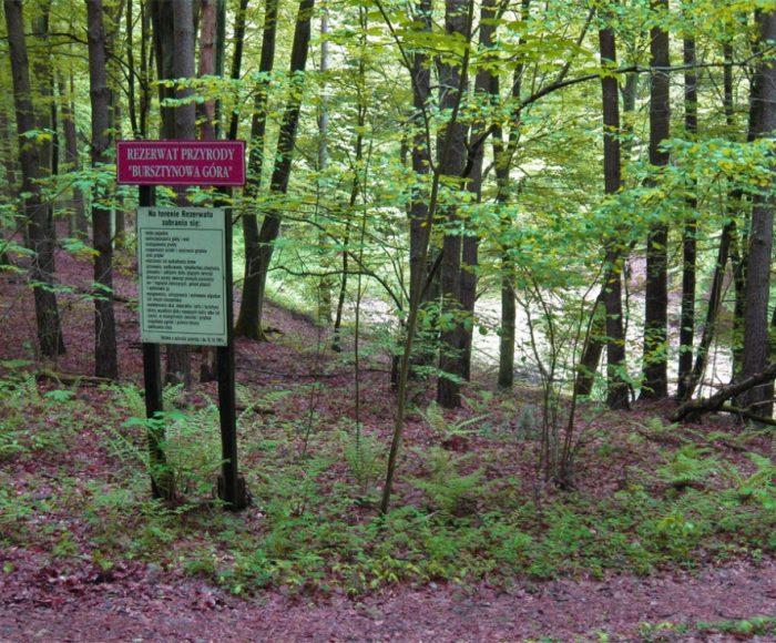 Bąkowo. Rezerwat przyrody Bursztynowa Góra