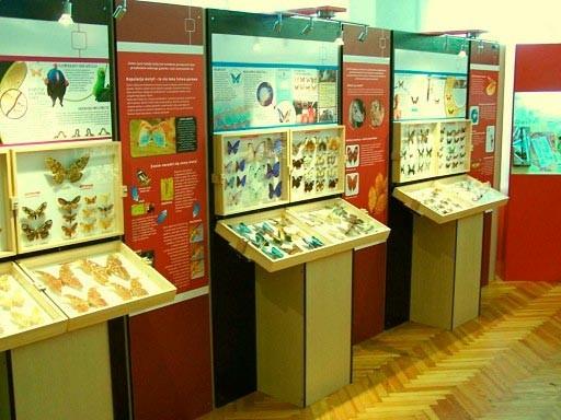 Łeba, Muzeum motyli. Zobacz największe na świecie okazy 2