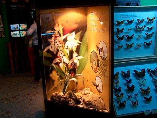 Łeba, Muzeum motyli. Zobacz największe na świecie okazy 1
