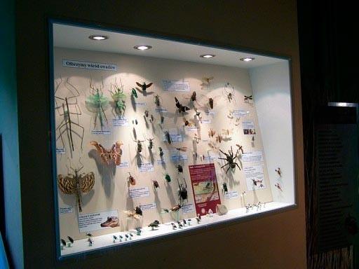 Łeba, Muzeum motyli. Zobacz największe na świecie okazy