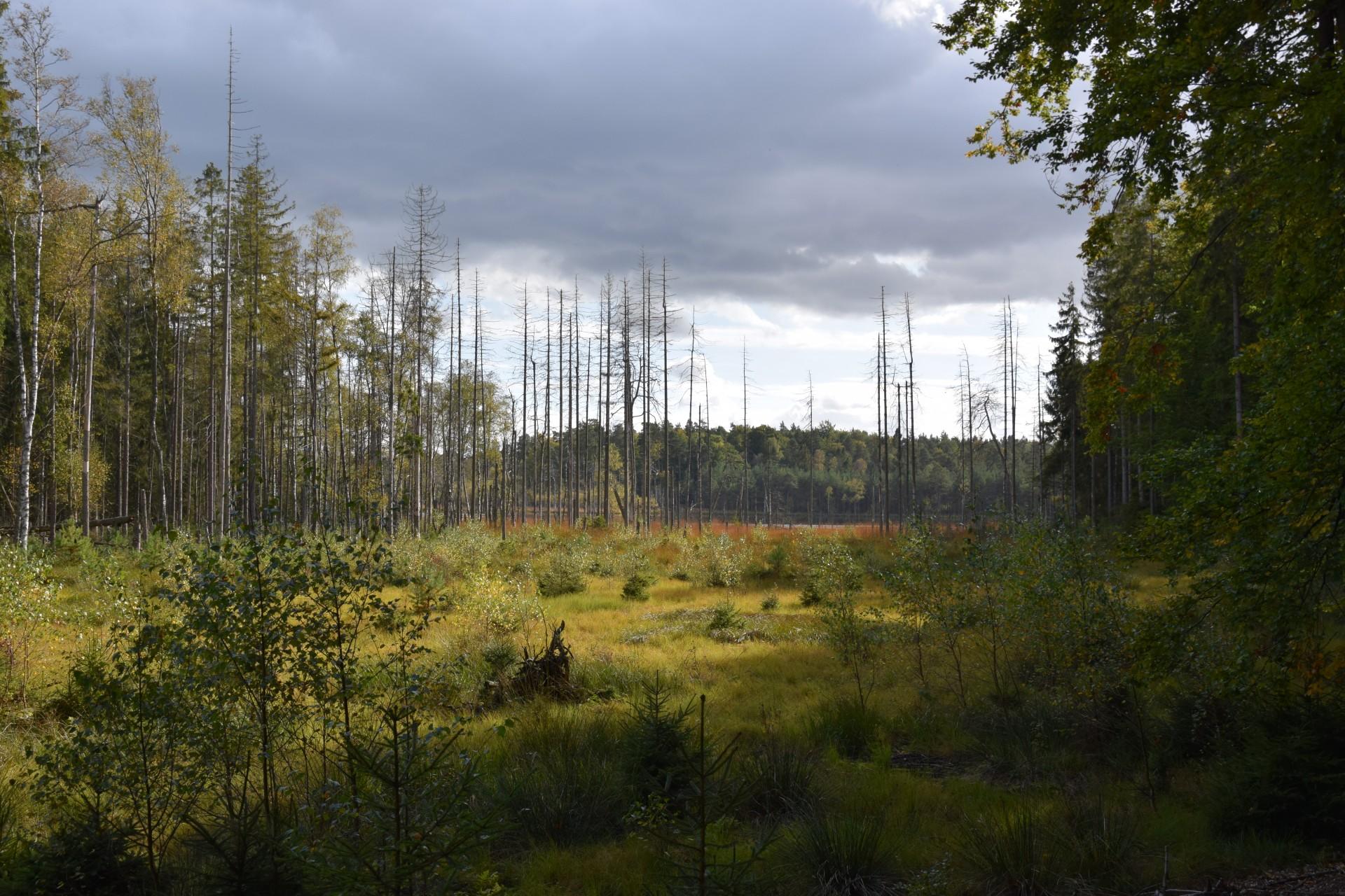 Lasy Mirachowskie. Pajęczyna ukryta między drzewami 8