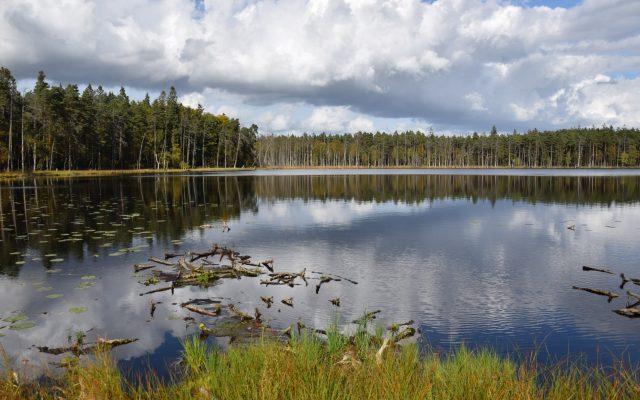 Lasy Mirachowskie. Pajęczyna ukryta między drzewami 7
