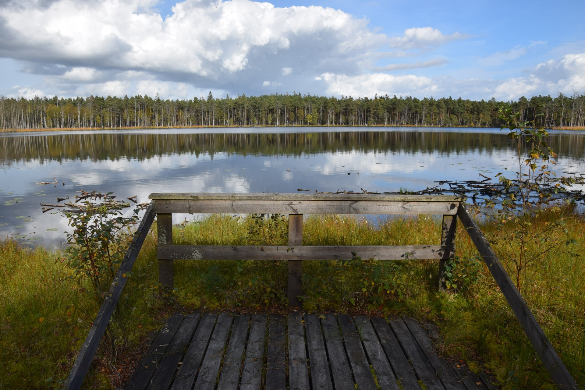 Lasy Mirachowskie. Pajęczyna ukryta między drzewami 6