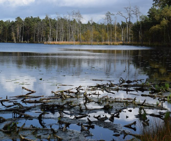 Lasy Mirachowskie. Rezerwaty przyrody 1