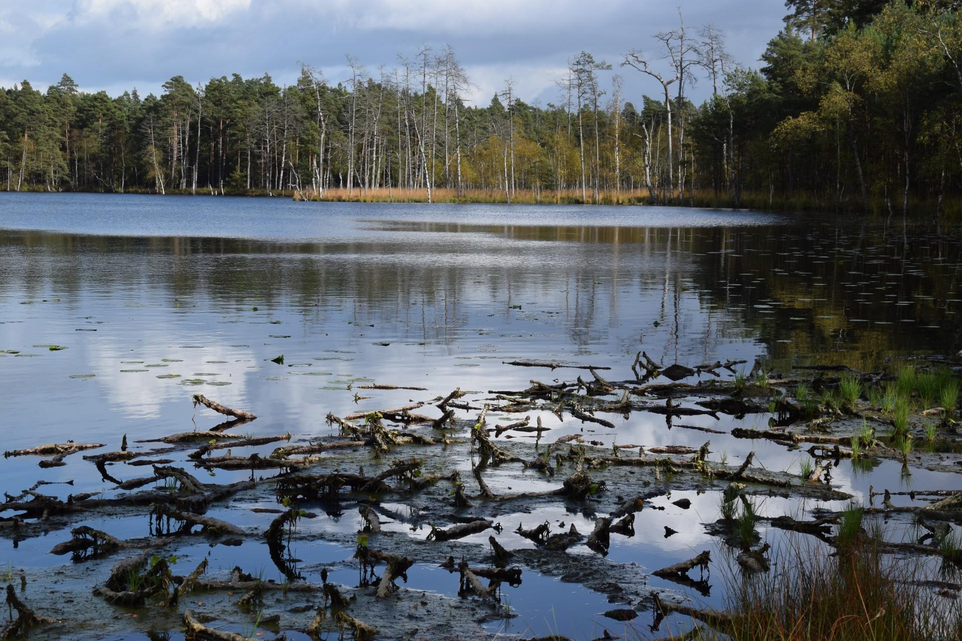 Rezerwat Kurze Grzędy, Kaszubski Park Krajobrazowy