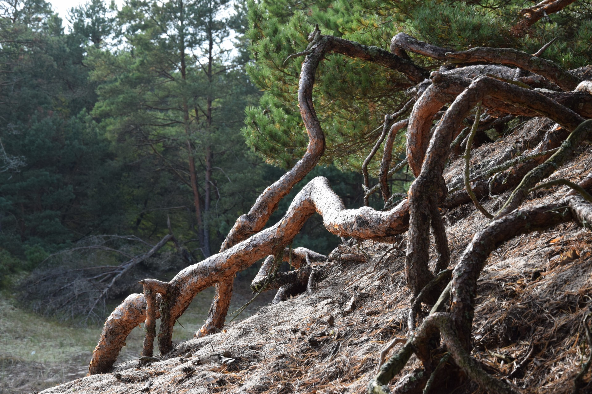 Pomyślunki wiatrem i deszczem smagane. Słowiński Park Narodowy 6
