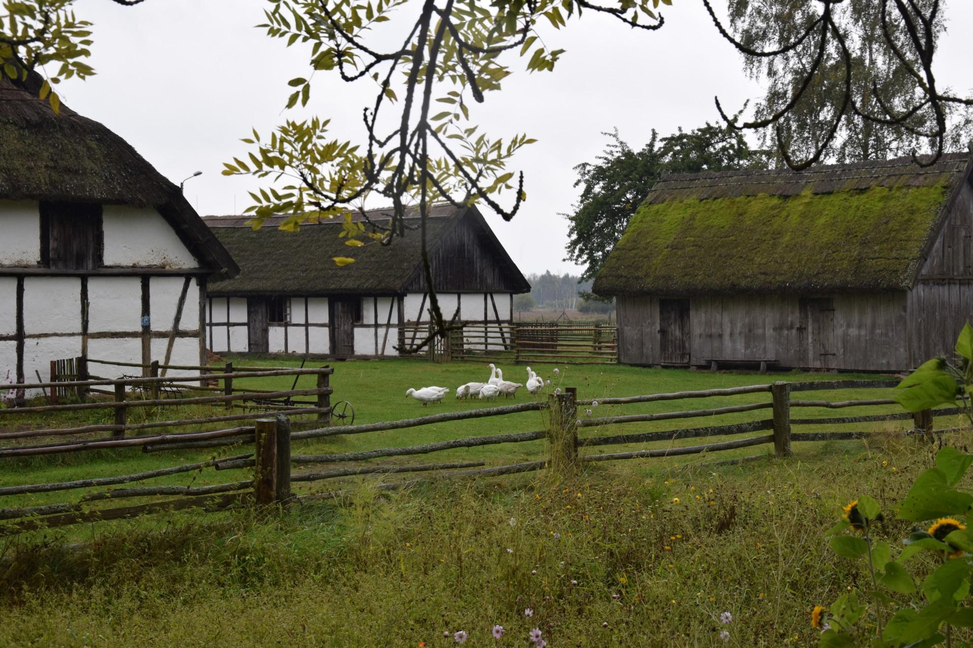 Pomyślunki wiatrem i deszczem smagane. Słowiński Park Narodowy 11