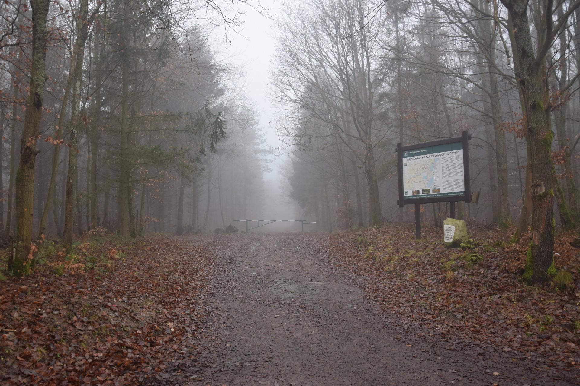 Wejście na czerwony szlak pieszy przy Ławce Asesora. Fot. Tomasz Słomczyński/Magazyn Kaszuby