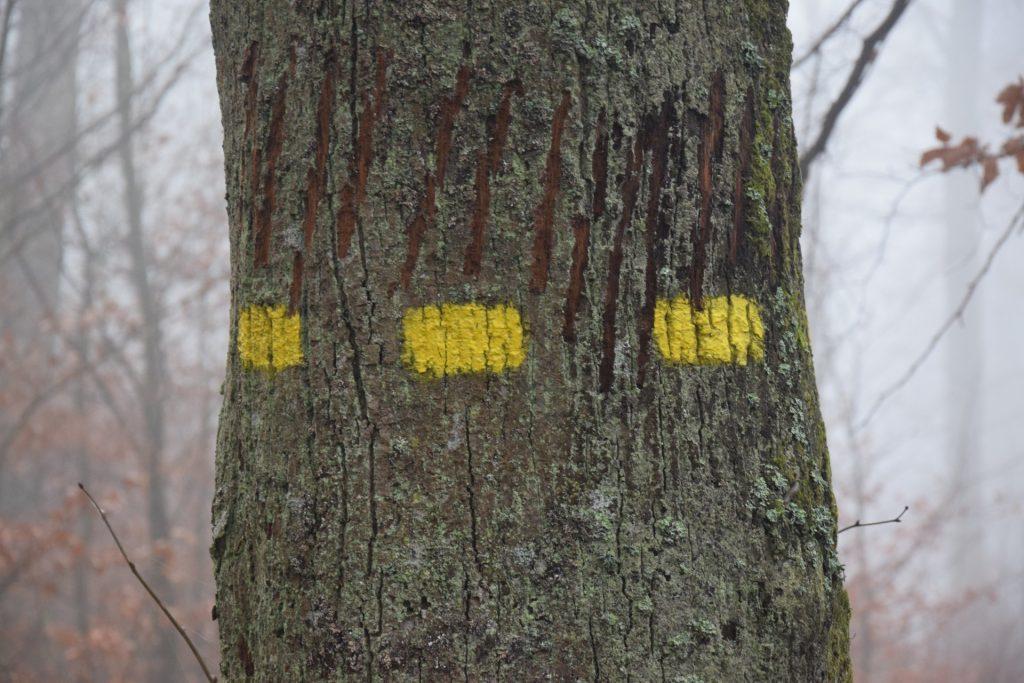 Drzewa jak ludzie? Mówią i czują 1