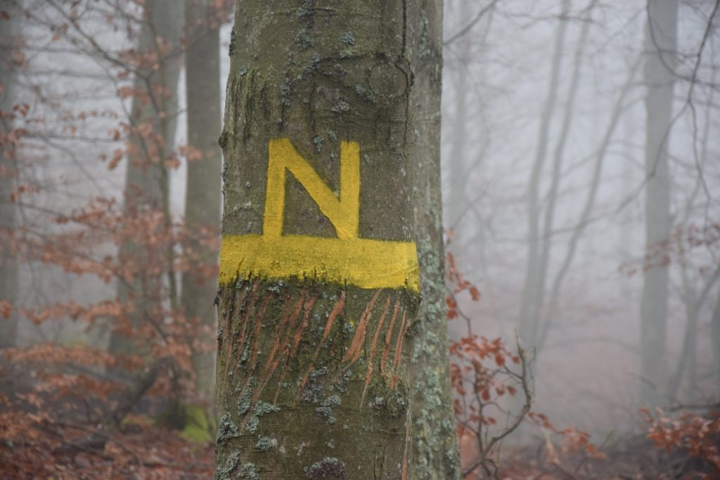 Drzewa jak ludzie? Mówią i czują 2