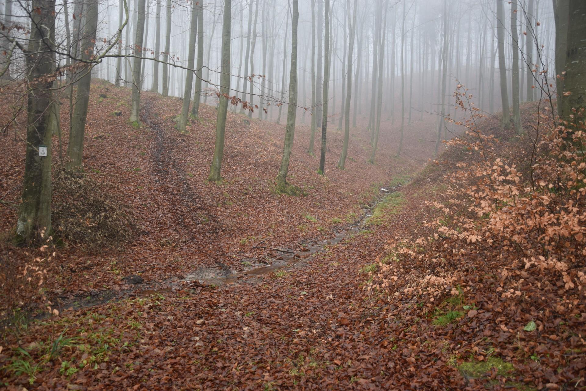 W listopadowym lesie. Fot. Tomasz Słomczyński/Magazyn Kaszuby