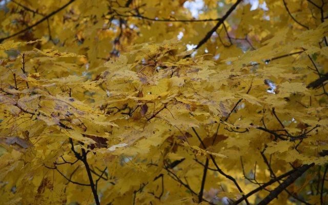 Jesień na Kaszubach. Rusz się z domu