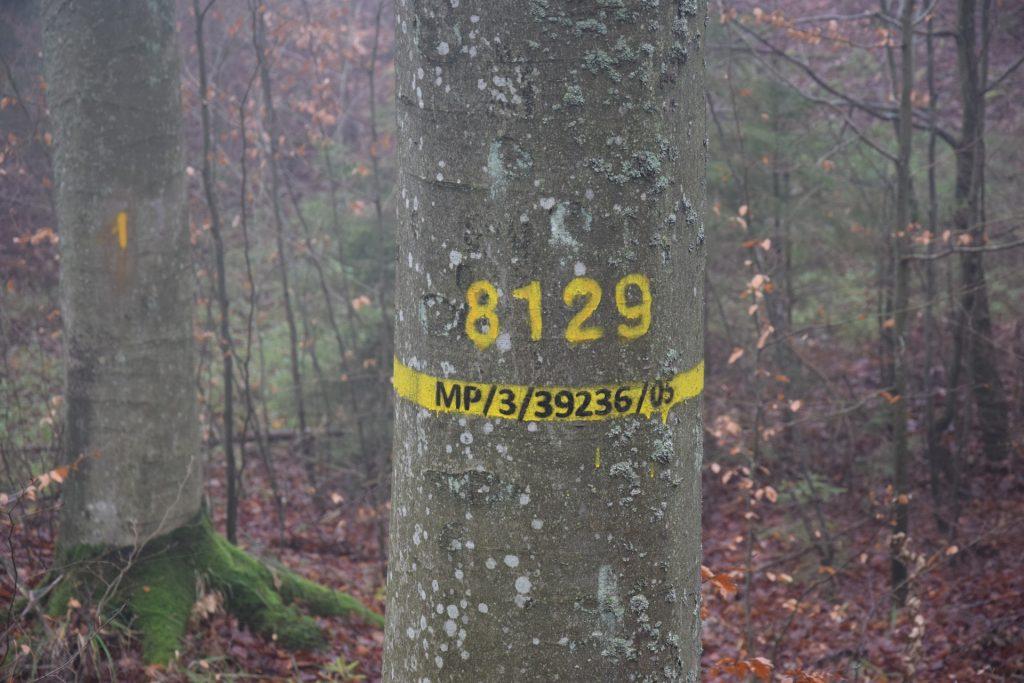 Drzewa jak ludzie? Mówią i czują 3
